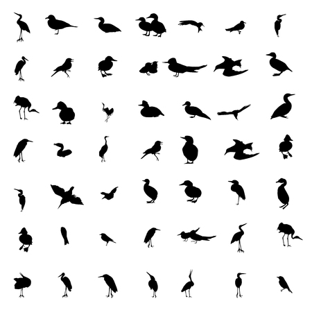 duck silhouette: Set of black and white silhouettes of birds: dove, duck, gull, peacock and hummingbird. Vector illustration. Illustration