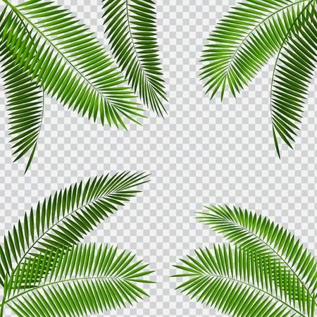 Palm Leaf Vector Illustration on Transparent Background Ilustração