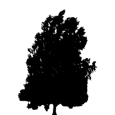 Black and White Silhouette of Deciduous Tree, whose branches dev Çizim