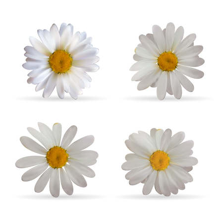 camomile tea: Colorful Naturalistic Beautiful 3D Chamomile Set. Organic Cosmet