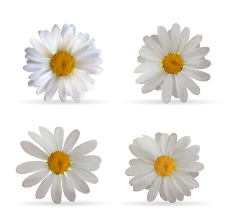 Colorful Naturalistic Beautiful 3D Chamomile Set. Organic Cosmet
