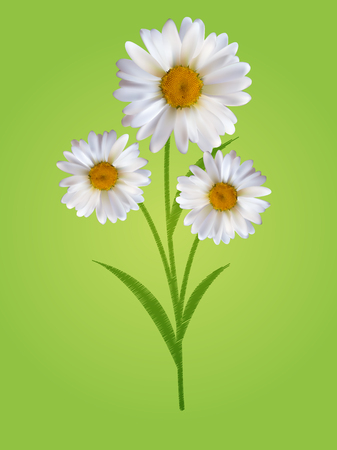 camomile tea: Colorful Naturalistic Beautiful 3D Chamomile Background Vector I
