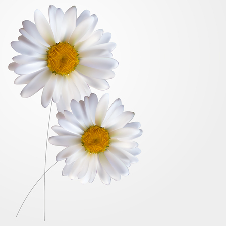 Colorful Naturalistic Beautiful 3D Chamomile Background Vector Illustration