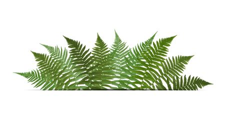 Fern Leaf Vector Background  with White Frame Illustration