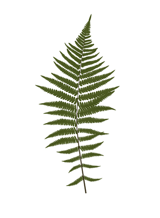 Fern Leaf Silhouette Vector Background Illustration