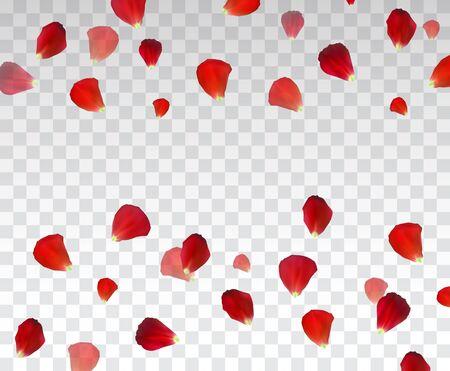 Set of Naturalistic Rose Petals on transparent background. Illustration