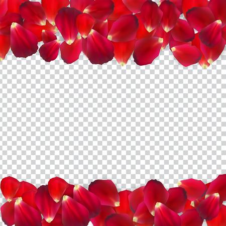 Naturalistic Rose Petals on Transparent Background. Vector Illustration