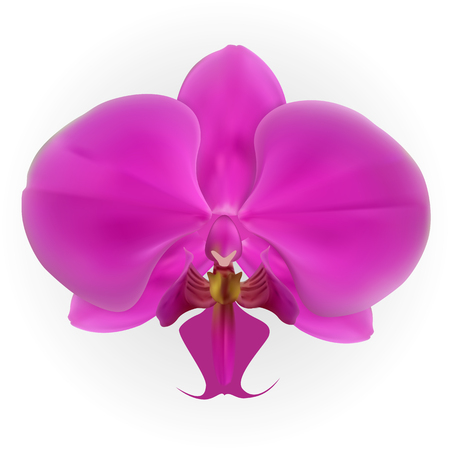 Colorful naturalistic orchid Isolated on White Background. Vector Illustration.