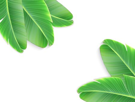 A naturalistic leaf of a banana palm with flower. Vector Illustration. Stock Photo