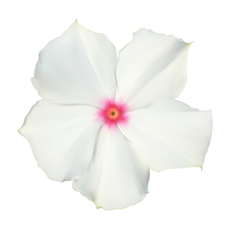 Isolated Colorful beautiful naturalistic white flower. Vector Il
