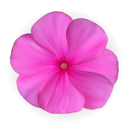 Isolated Colorful beautiful naturalistic Pink flower. Vector Ill