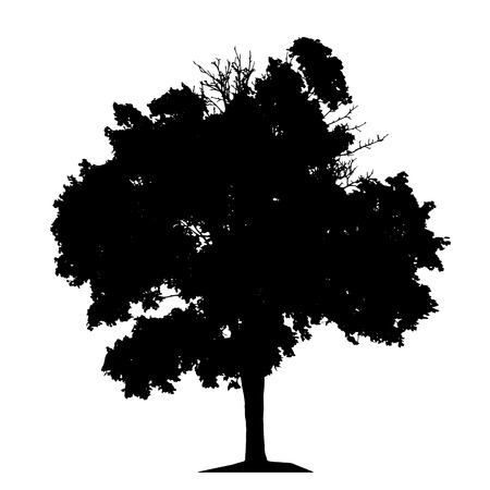 Tree Silhouette Isolated on White Backgorund. Vecrtor Illustration. EPS10 Иллюстрация