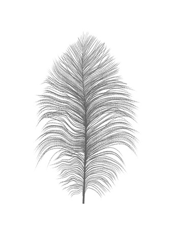 Silhouette of beautiful natural ostrich feather Illustration. Stockfoto