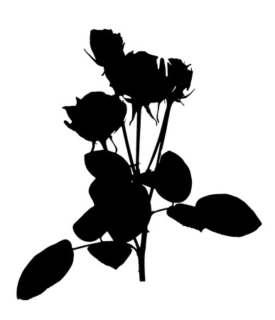 Beautiful Silane White and Black Roses. Isolated on White Background. Vector Illustration. EPS10
