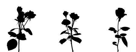Set of Beautiful Silane White and Black Roses. Isolated on White Background. Vector Illustration. EPS10