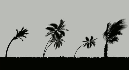 Palm trees during storm and hurricane. Leaves fly across the sky from a storm. Vector Illustration Vektoros illusztráció