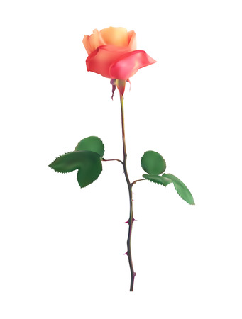 Beautiful Pink Rose Stems. Isolated on White Background. Vector Illustration. EPS10 Çizim