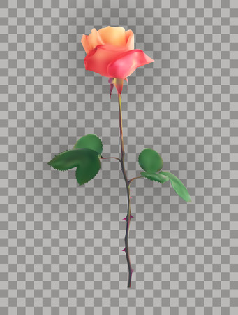 Beautiful Pink Rose Stems on a transparent background. Vector Illustration. EPS10