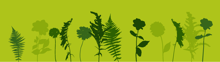 Colorful green twig fern and other plants of nature. Vector Illustration. EPS10