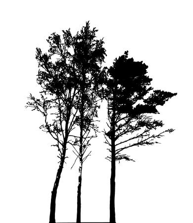 Silueta de árbol aislado sobre fondo blanco. Ilustración de Vecrtor. EPS10