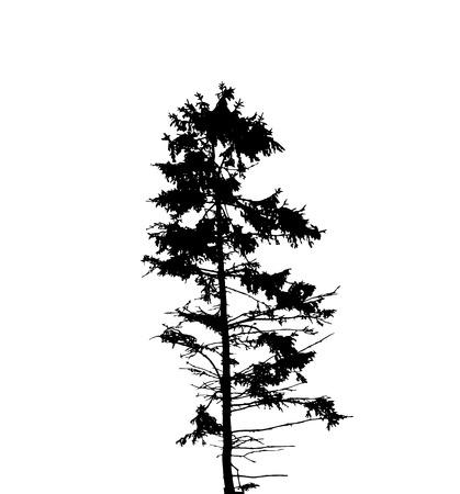 Siluetta dell'albero isolato su Backgorund bianco. Illustrazione di Vecrtor. EPS10 Vettoriali