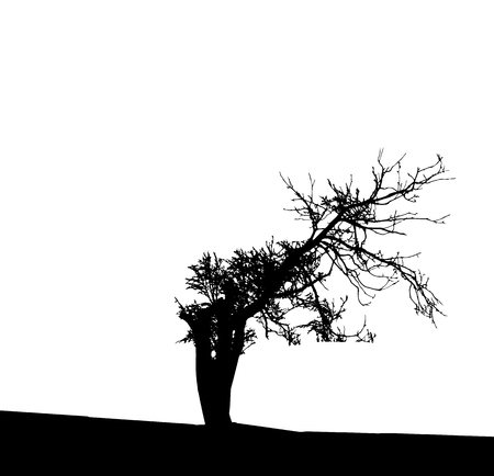 Tree Silhouette Isolated on White Backgorund. Vecrtor Illustration. EPS10 向量圖像
