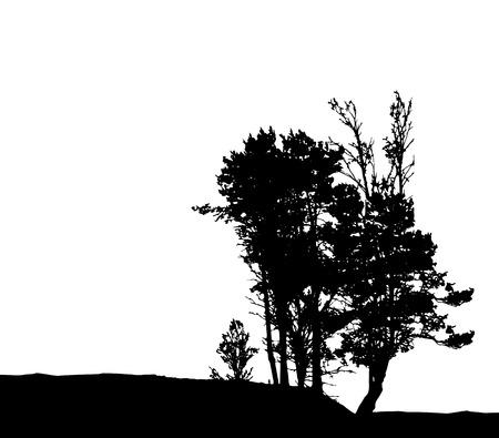 Tree Silhouette Isolated on White Backgorund. Vecrtor Illustration. EPS10 Illustration