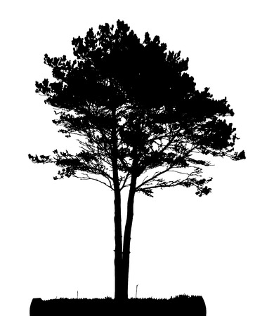 Tree Silhouette Isolated on White Backgorund. Vecrtor Illustration. EPS10