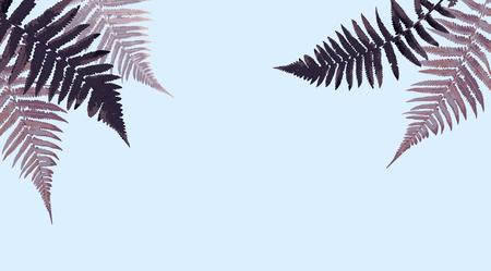 Fern Leaf Vector Background Illustration EPS10 Ilustração