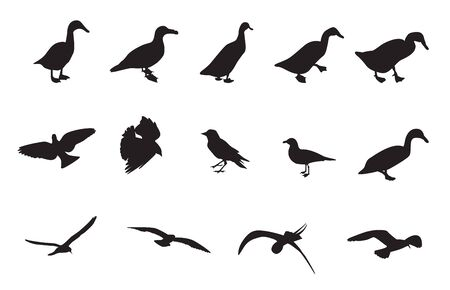 Black and White Silhouettes of various birds. Vector Illustration.