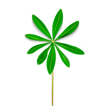 Naturalistic Colorful Lupine Leaf on White Background. Vector Illustration. EPS10
