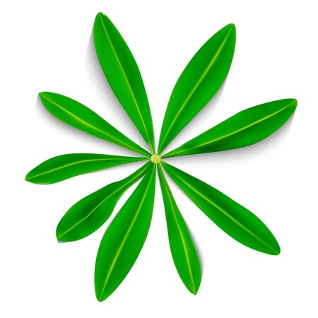 Naturalistic Colorful Lupine Leaf on White Background. Vector Illustration