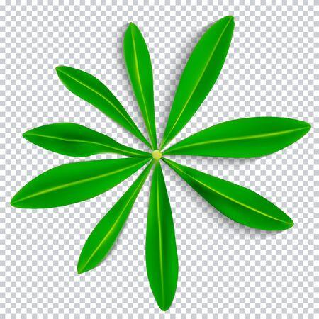 Naturalistic Colorful Lupine Leaf on Transparent Background. Vector Illustration. EPS10