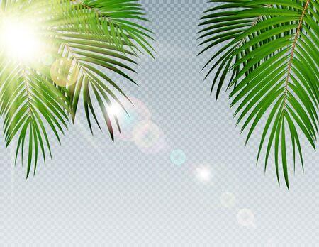Summer Time Palm Leaf with sunbeam on Transparent Vector Background Illustration EPS10 Stock Illustratie