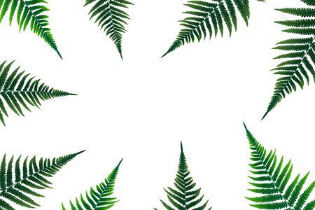 Fern Leaf Vector Background Illustration EPS10