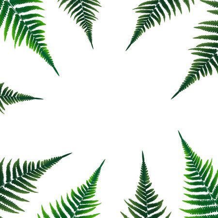 Fern Leaf Vector Background Illustration EPS10