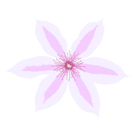 Beautiful clematis flower on white background. Vector Illustration EPS10 Ilustração