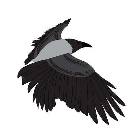Raven image isolated on white background. Vector Illustration. EPS10