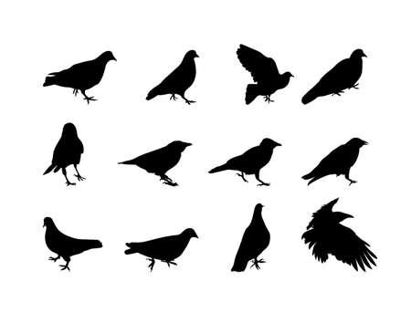 Black and white silhouette dove crow isolated. Vector Illustration. EPS10 Ilustração Vetorial