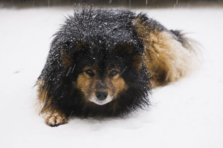 frost winter: dog, animal, pet, friend, mongrel, breed, paw, guard, fluffy, street, yard, snow, frost, winter, cold, cute, brown, black, white