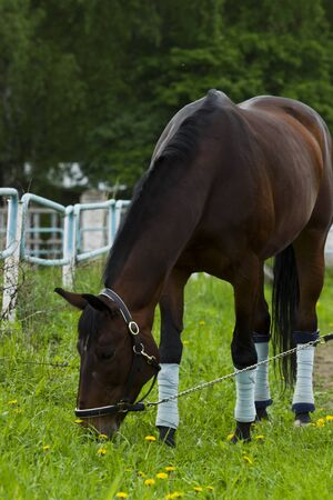 consuming: Horse, consuming fresh young grass. Stock Photo