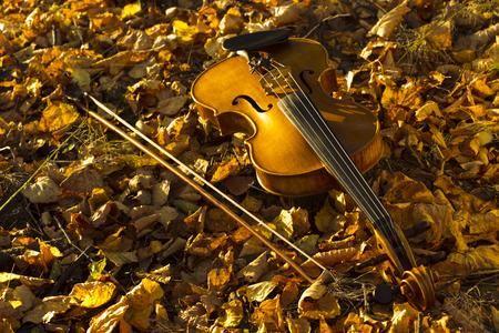 instrumentos de musica: Violín acostado en las hojas caídas en el bosque de otoño, iluminado por la noche solntsem.Vid desde la parte superior