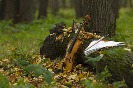 Violin standing by the trunk of a tree against a background of fallen leaves and autumn forest, lit by the sun