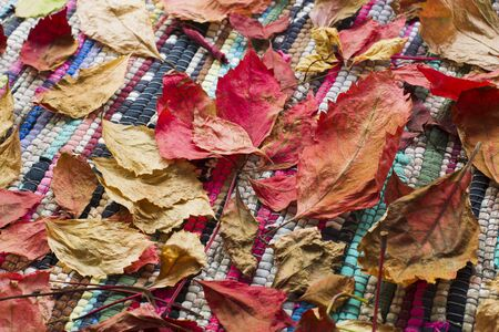 homespun: Autumn leaves lying on the rug homespun, natural light, view from the top Stock Photo