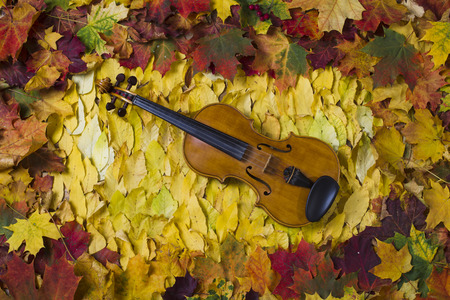 notas musicales: Violin on fallen leaves in the frame of maple leaves, studio lighting, the view from the top Foto de archivo