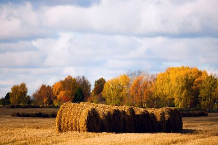 chaff: Straw in the field
