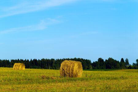 Rural landscape with a field, cut grass and hay rolls, sunlight