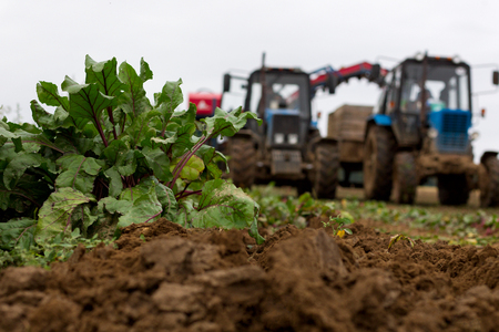 Agricultural machinery for harvesting on a beet field