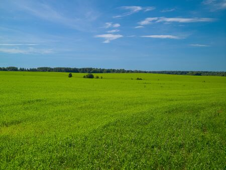 Summer landscape with a field of green grass blue sky with white clouds on a sunny day