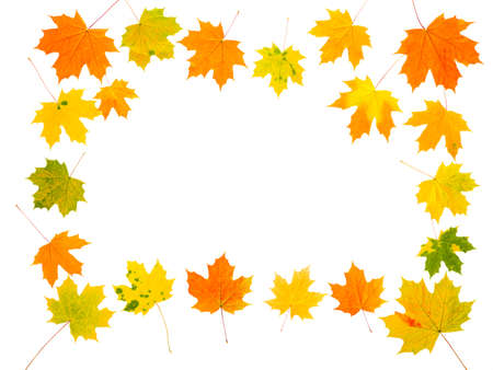 Autumn maple leaves lined with frame on white background, isolate, top view